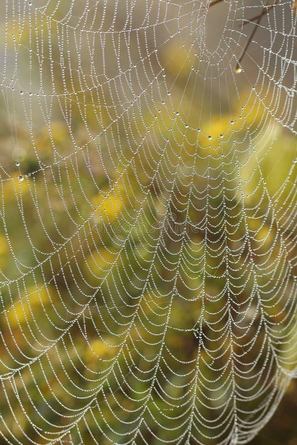 蜘蛛网与早晨早晨降露 库存照片