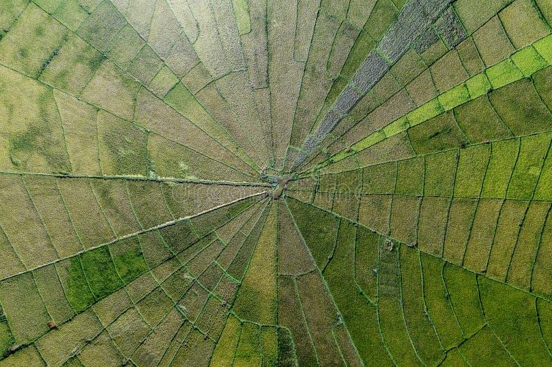 蜘蛛网位于Meler村庄的稻田鸟瞰图, Ruteng,弗洛勒斯,印度尼西亚 免版税库存图片
