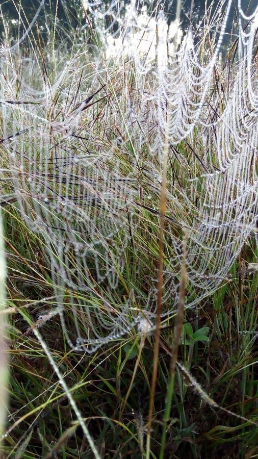 蜘蛛网在冬天 免版税库存图片