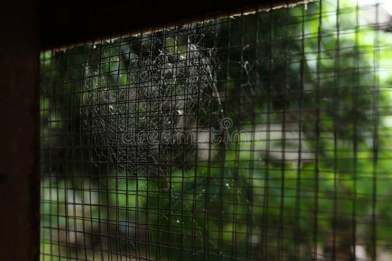 蜘蛛网在老窗口生锈的钢绳上的蜘蛛网 免版税库存图片