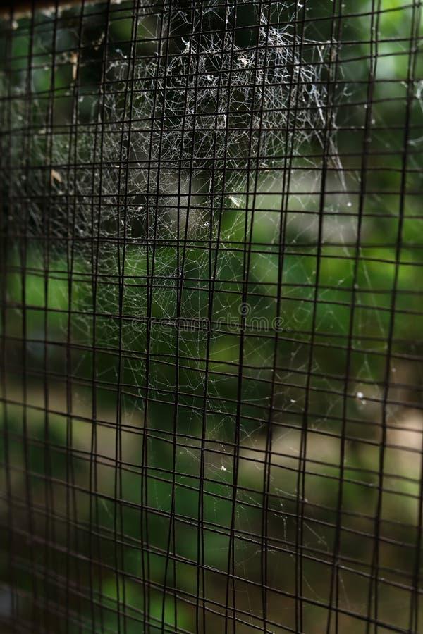 蜘蛛网在老窗口生锈的钢绳上的蜘蛛网 免版税库存照片