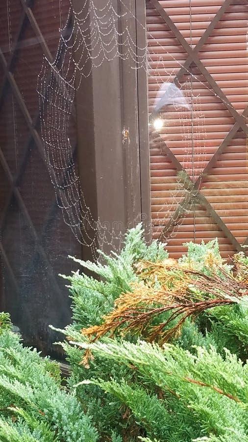 蜘蛛网在雨中 库存图片