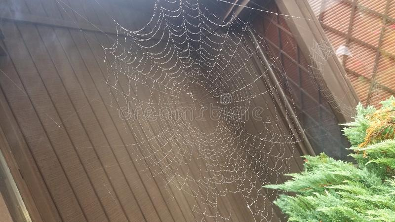 蜘蛛网在雨中 库存照片