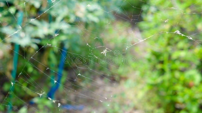 蜘蛛网在绿色植物中 免版税库存照片
