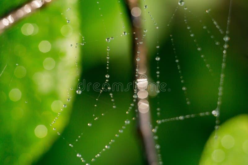 蜘蛛网宏指令 图库摄影
