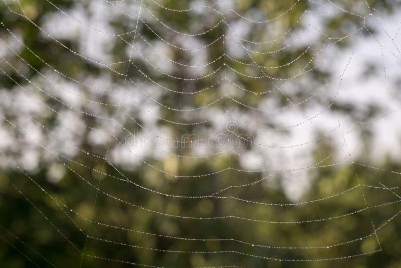 蜘蛛网宏指令 免版税库存图片