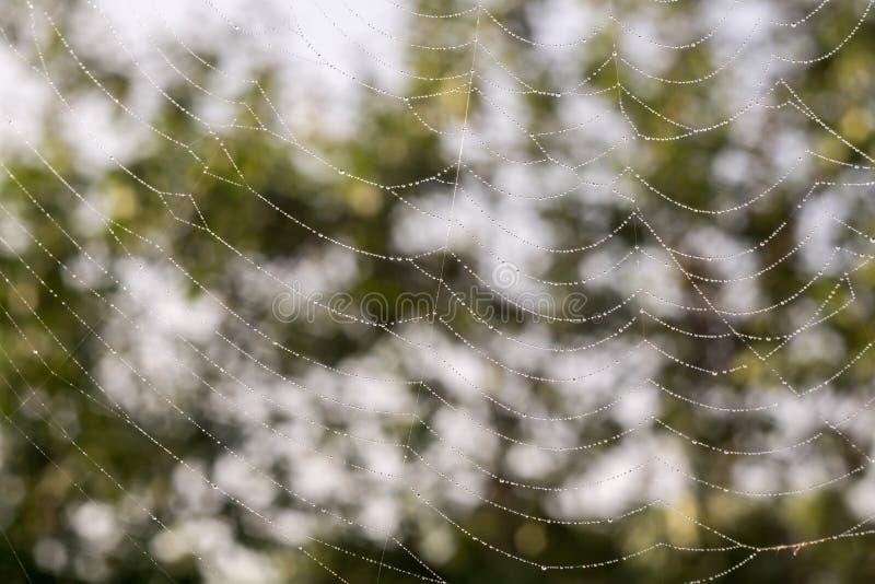蜘蛛网宏指令 免版税图库摄影