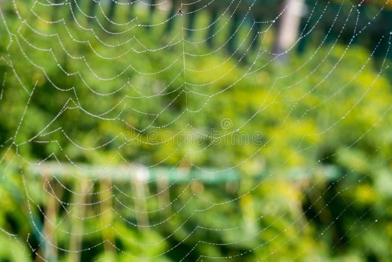 蜘蛛网宏指令 库存图片