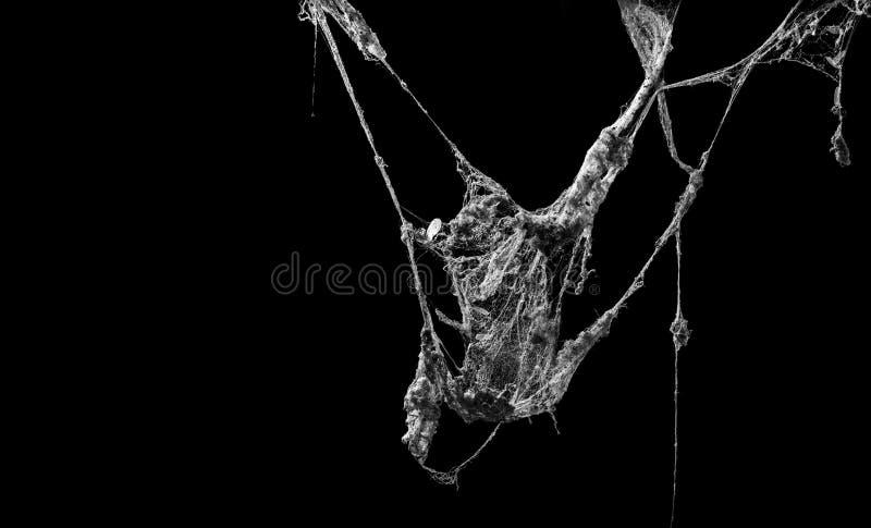 蜘蛛网或在黑背景隔绝的蜘蛛网 库存图片