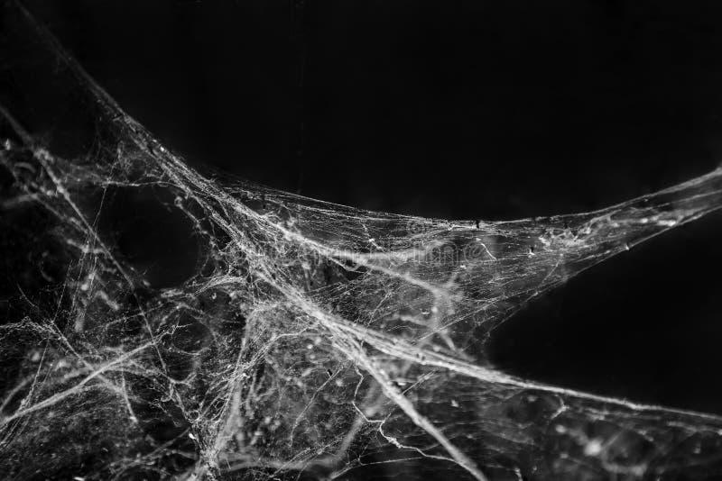 蜘蛛网或蜘蛛网背景 免版税图库摄影