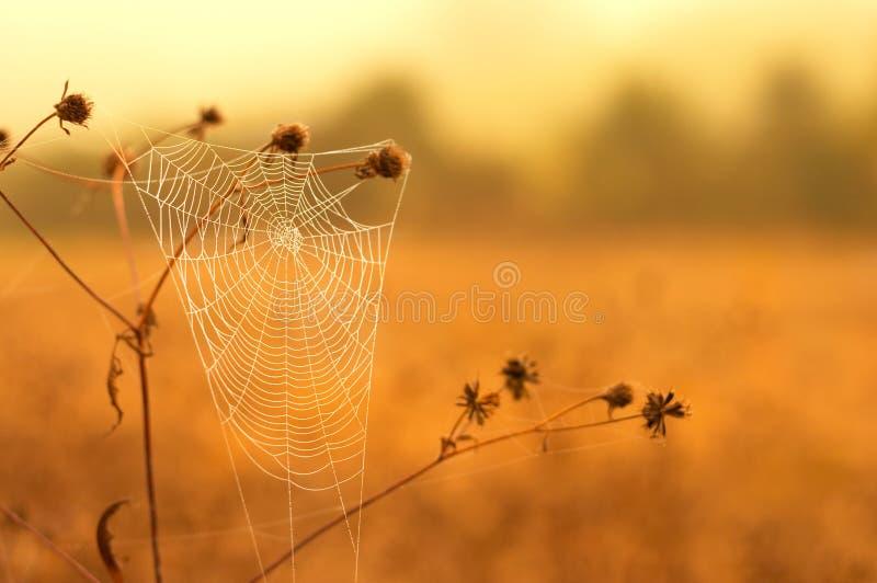 蜘蛛网白色 库存照片
