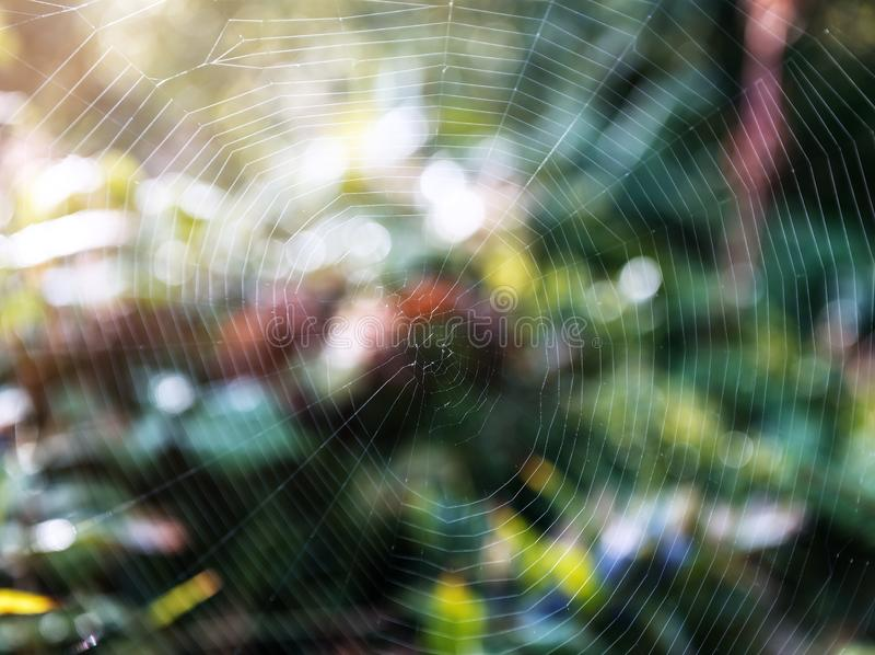 蜘蛛网纹理在绿色森林里 库存照片