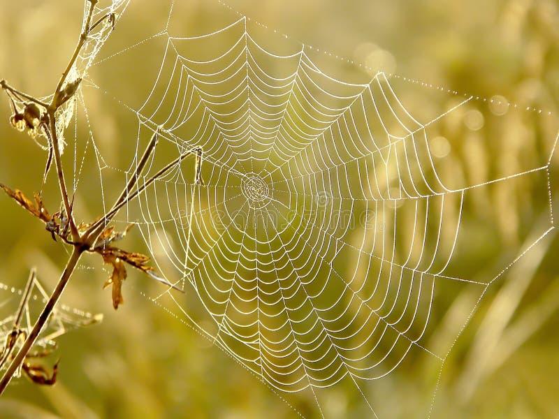 蜘蛛网草甸蜘蛛日出 库存图片
