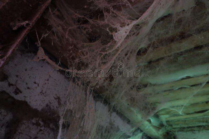 蜘蛛网,蜘蛛,蜘蛛网,土牢室 图库摄影