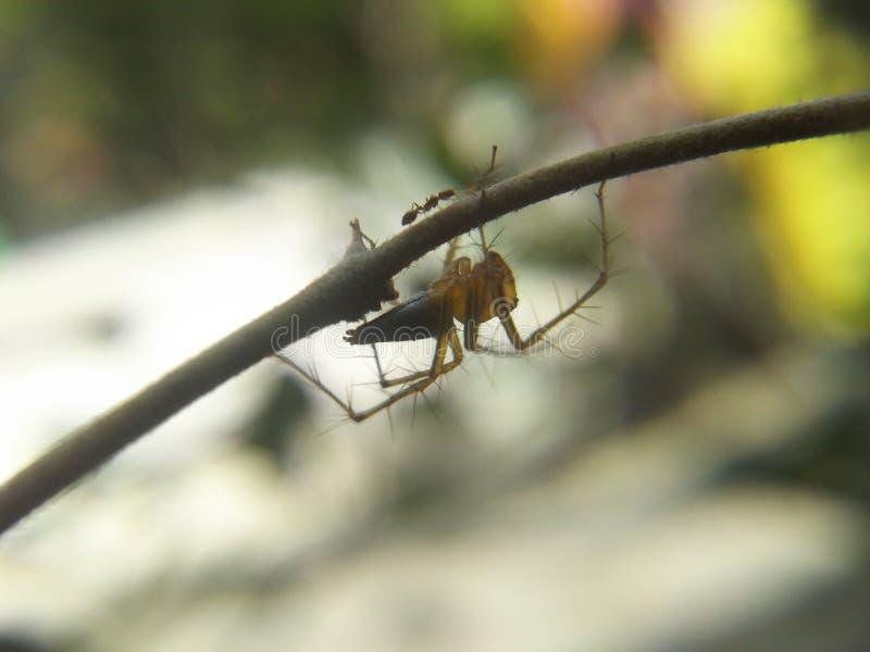 蜘蛛蚂蚁 免版税库存照片