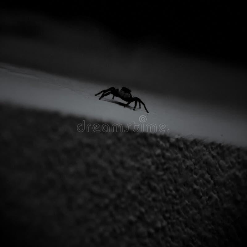 蜘蛛走方形字体照片 图库摄影