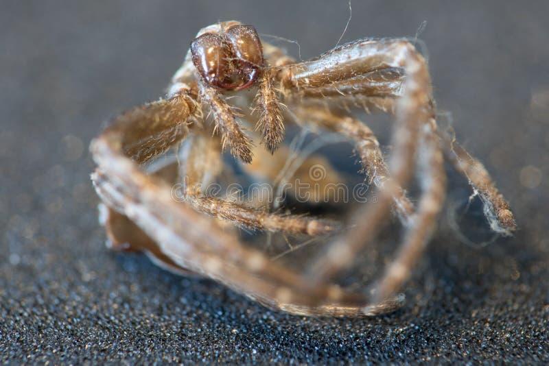 蜘蛛身体 免版税库存图片