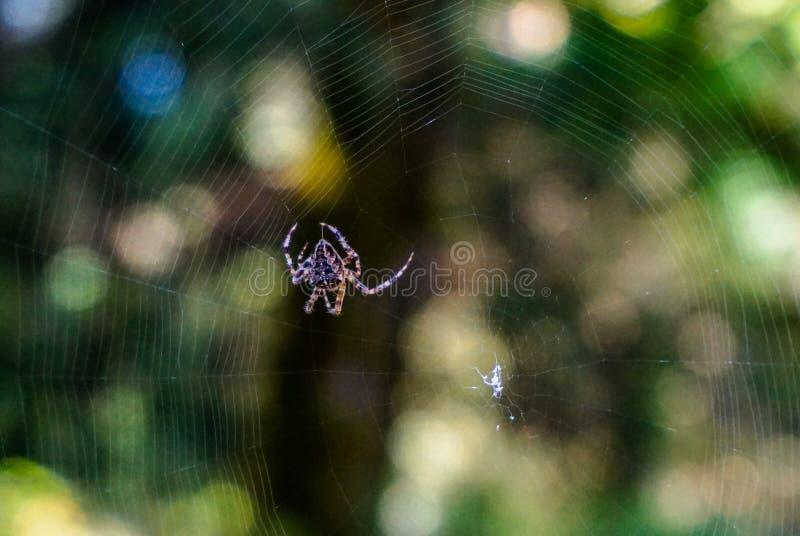 蜘蛛转动的网关闭  图库摄影
