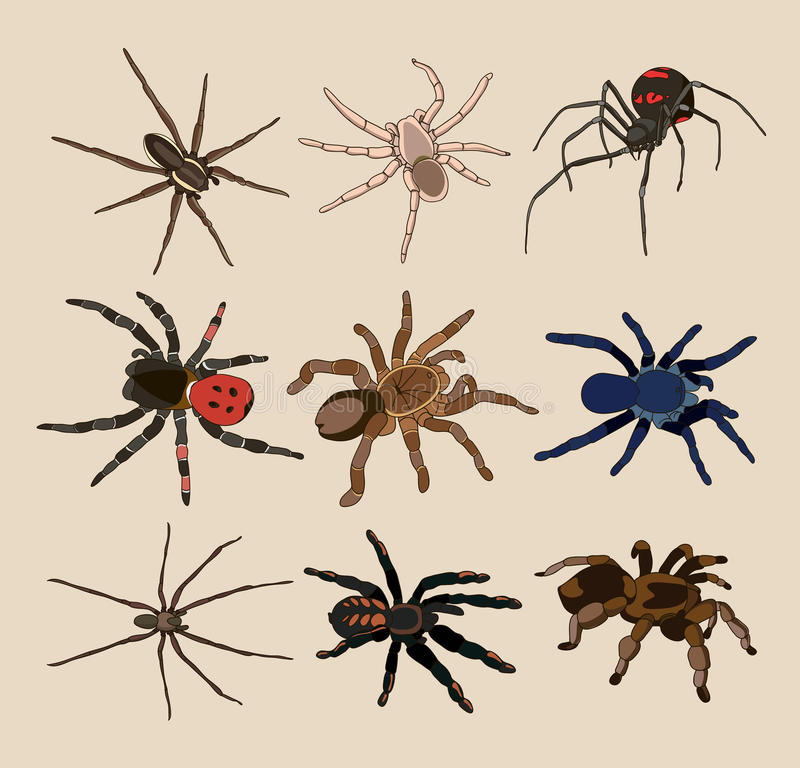 蜘蛛集合传染媒介  库存例证