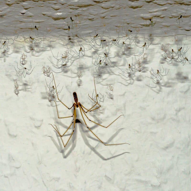 蜘蛛阴影 库存照片