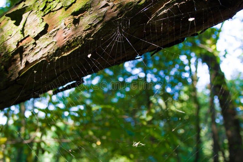 蜘蛛` s网在阳光下 图库摄影