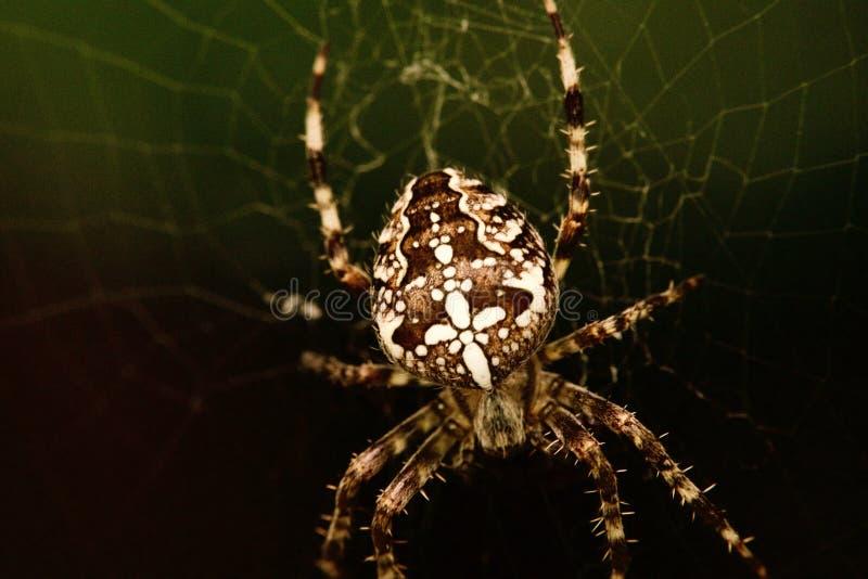 蜘蛛makro 免版税库存图片