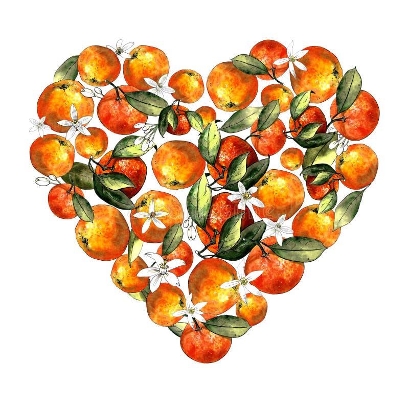 蜜桔、叶子和花的心脏在白色背景 图画标志 库存图片