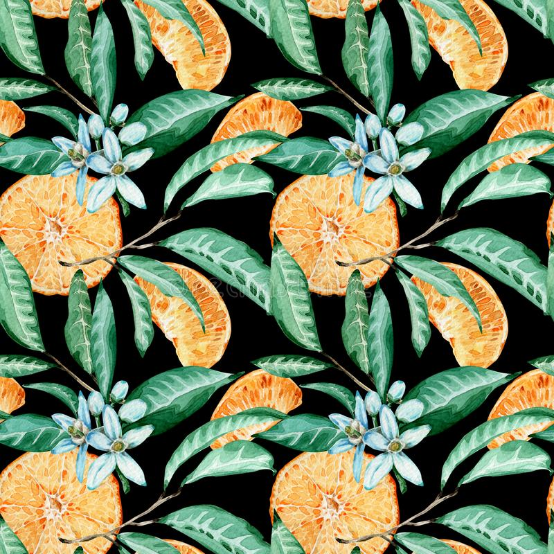 蜜桔无缝的样式 橙色裁减、花和叶子 在黑背景隔绝的水彩例证 向量例证