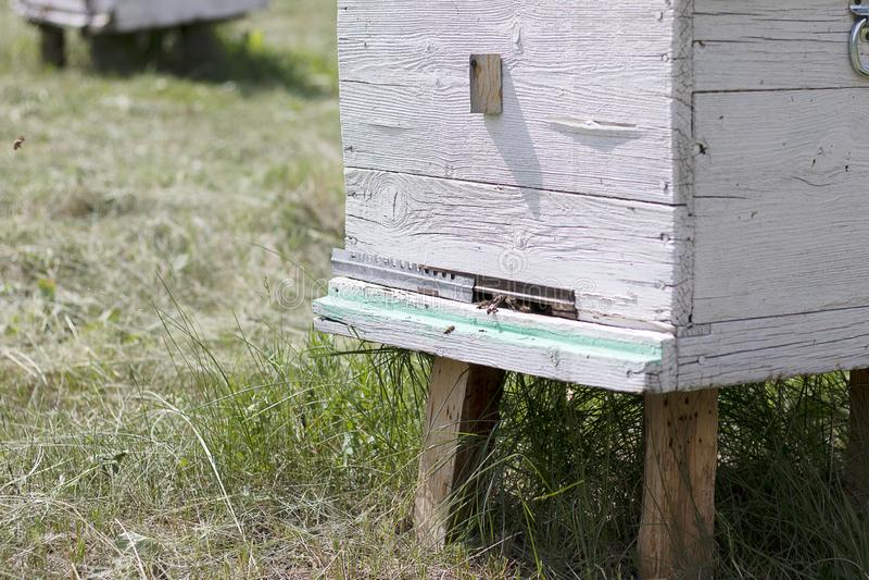 蜜蜂飞行入一个白色蜂箱并且收集蜂蜜 在蜂房的白色房子蜂 对蜂房的入口 自然的养蜂业 库存图片