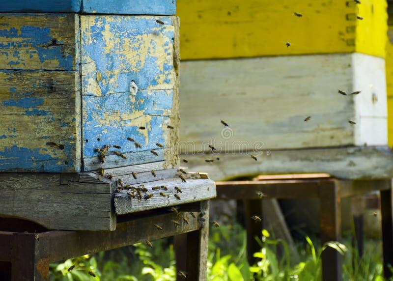 蜜蜂飞行到蜂房 r 蜂群带来蜂蜜家 ?? 免版税图库摄影