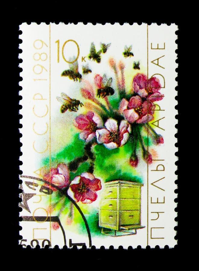 蜜蜂(Apis mellifica),花和蜂房,养蜂业serie, c 库存照片