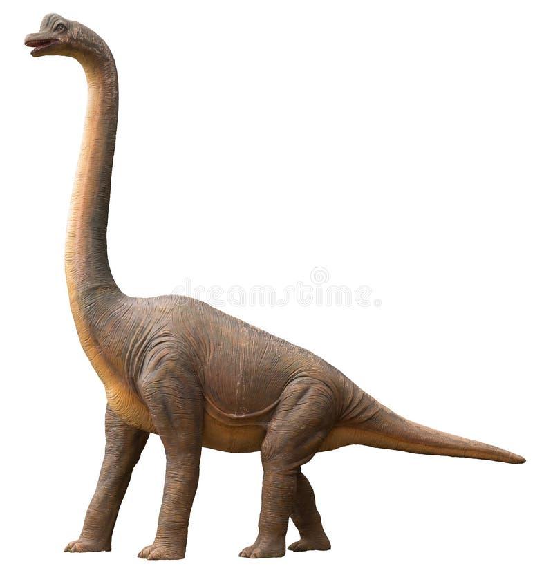 蜥脚类恐龙 库存图片