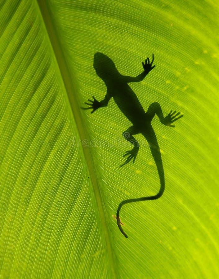 Download 蜥蜴剪影 库存图片 - 图片: 1556014