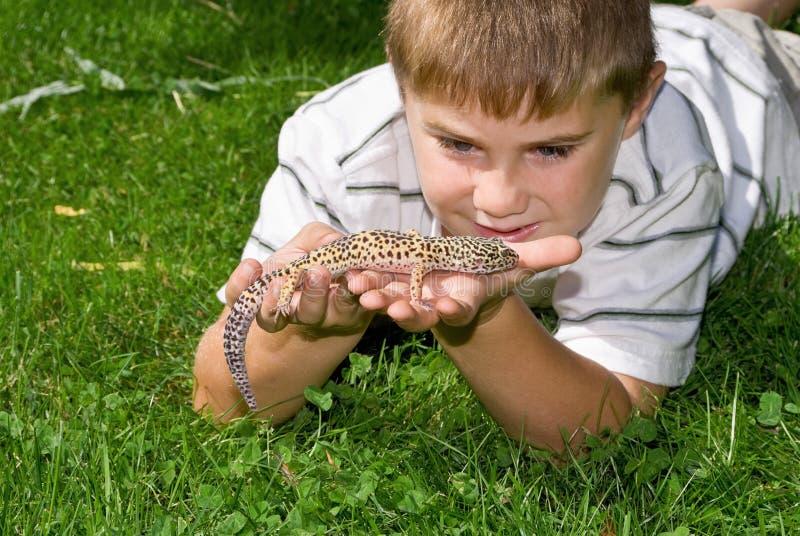 蜥蜴宠物 库存图片
