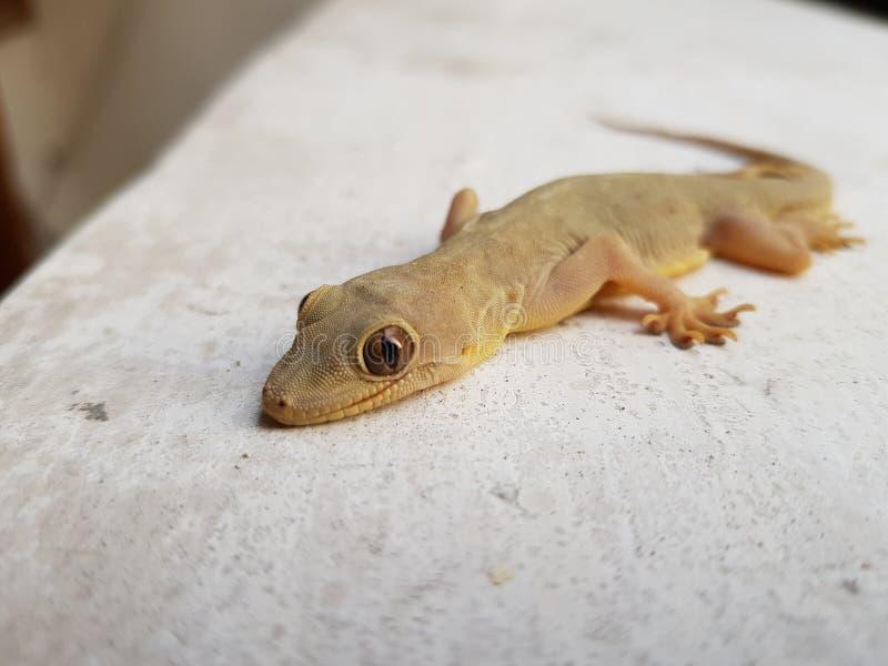 蜥蜴爬行动物 库存图片