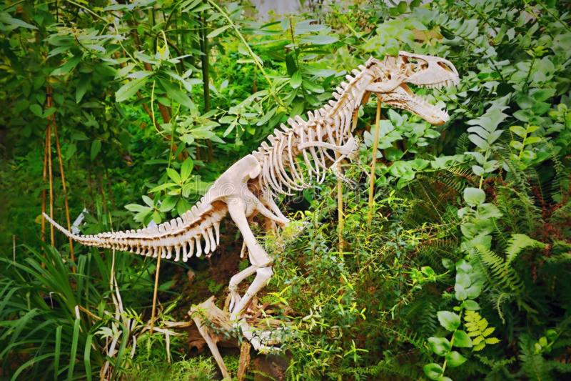 蜥蜴骨骼自捷克植物园温室在有梦想仿效的特普利采 图库摄影