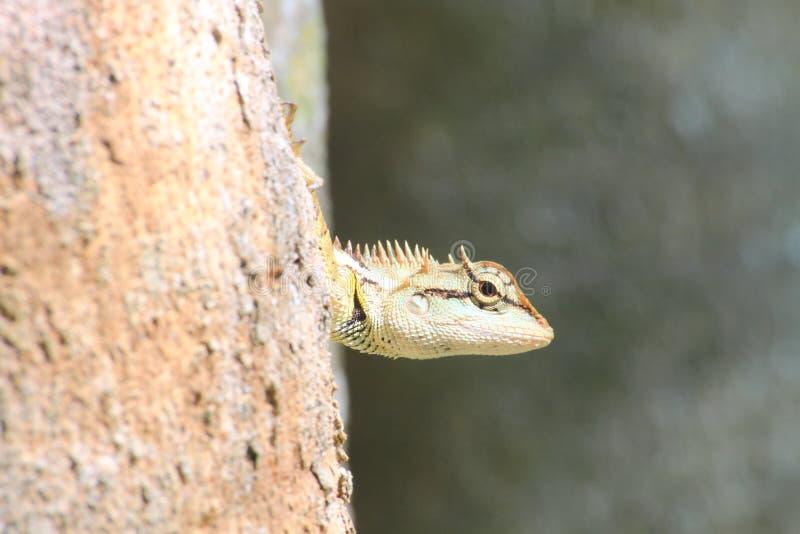 蜥蜴皮肤细节在树黏附 免版税库存图片