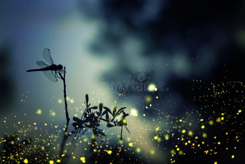 蜻蜓剪影和萤火虫飞行的抽象和不可思议的图象在夜森林童话概念 免版税图库摄影