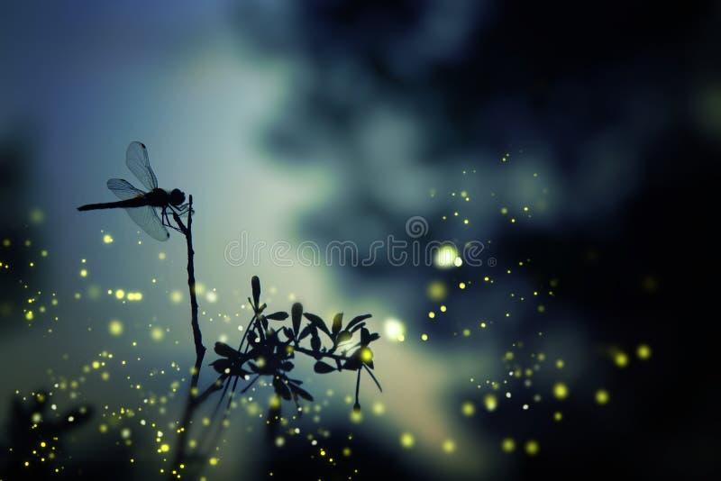 蜻蜓剪影和萤火虫f的抽象和不可思议的图象 免版税图库摄影