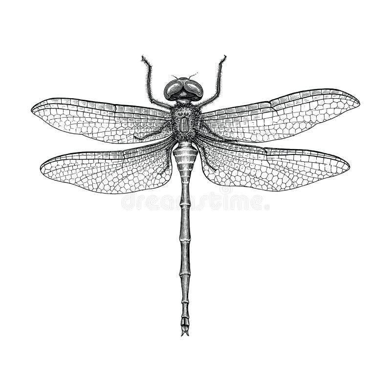 蜻蜓手图画葡萄酒板刻例证 库存例证