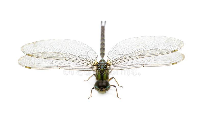 蜻蜓的图象在白色背景的 透明有翼昆虫 ?? ?? 图库摄影