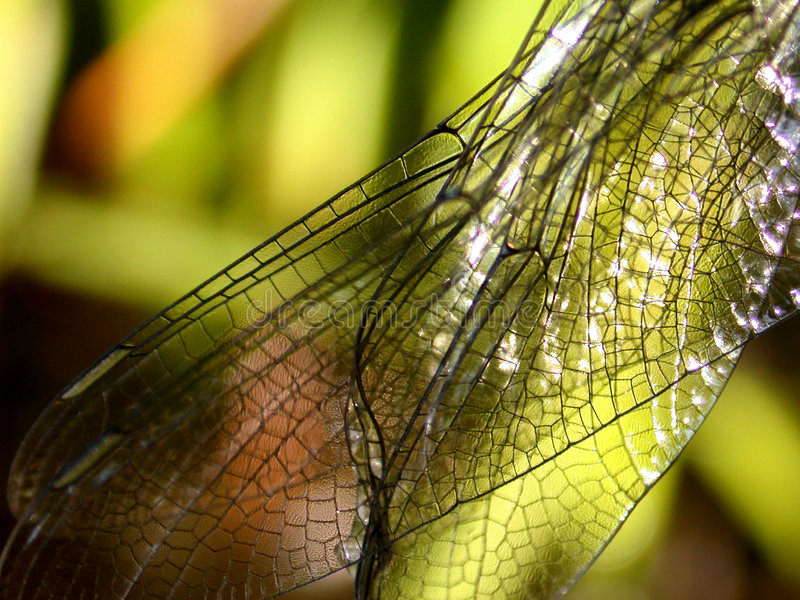 蜻蜓翼 库存图片