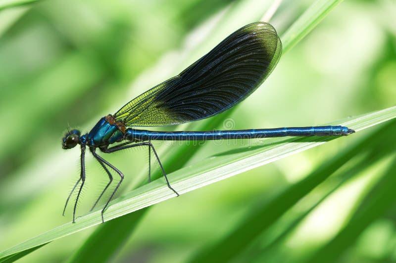 蜻蜓草绿色 库存照片