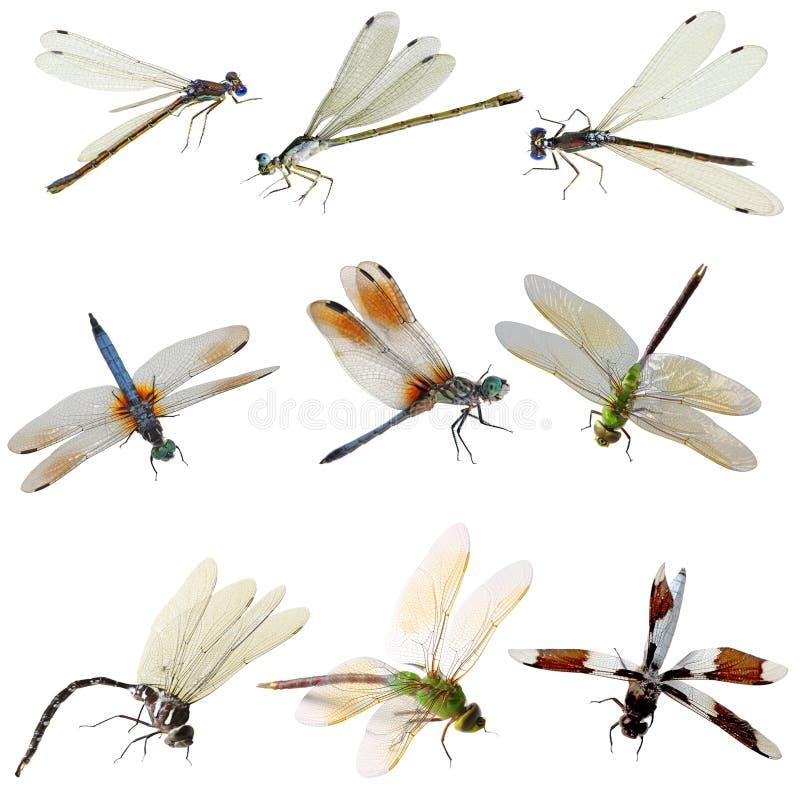 蜻蜓蜻蜓 库存照片