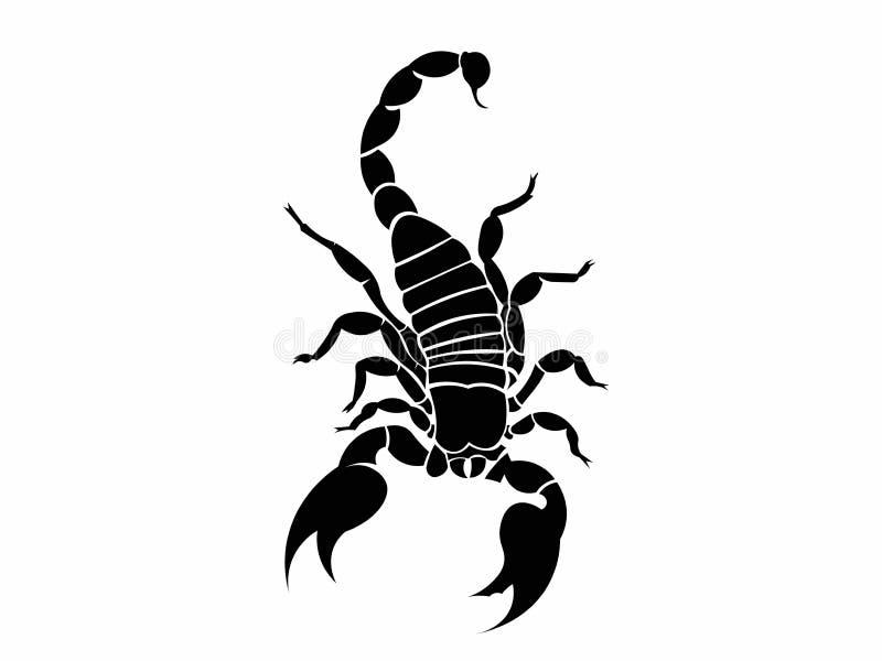 蝎子顶视图例证 库存照片