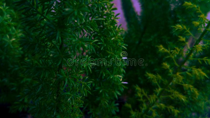 蝗虫或蚂蚱在绿色叶子 免版税库存照片