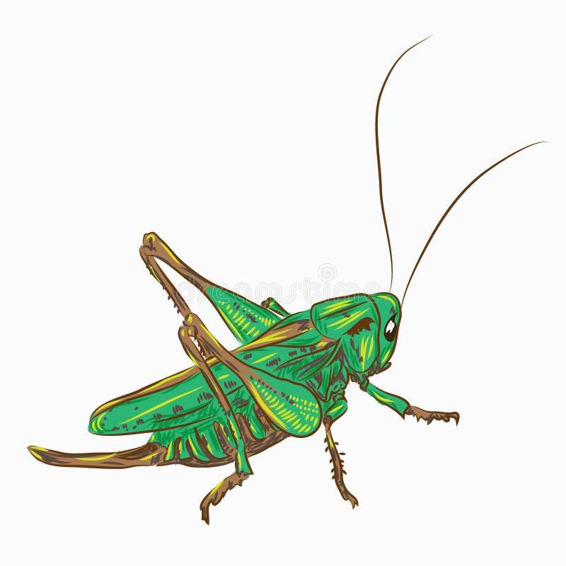 蝗虫 皇族释放例证