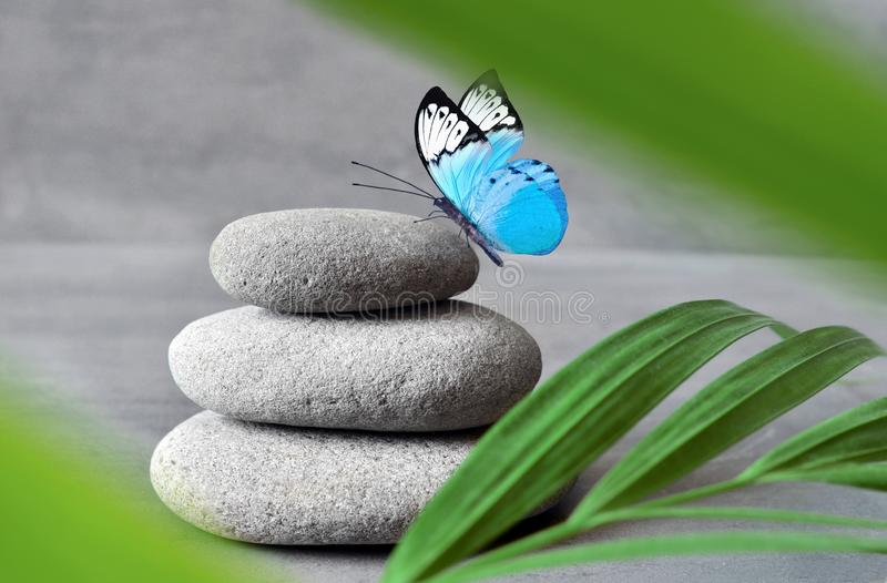 蝴蝶、光和平衡的石头 日叶子被采取的掌上型计算机晴朗 禅宗和温泉概念 库存照片