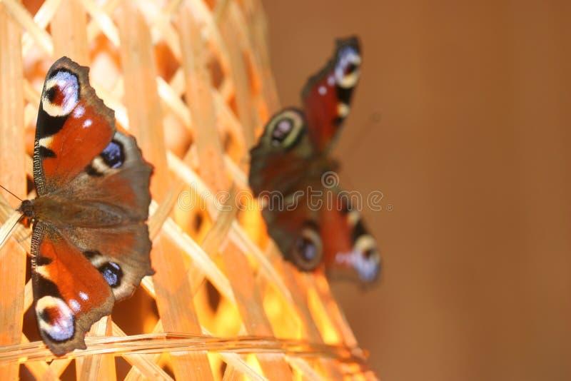 蝴蝶争吵系列 免版税库存图片