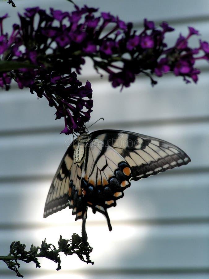 蝴蝶停止 免版税库存照片